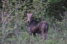 Moose Tour 5.23.12 6