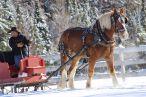 sleigh franconia 3